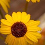 Yellow Sunshine Mix