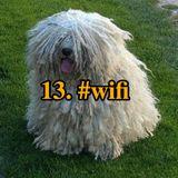 13. #wifi