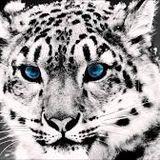 Mix Animals - Martin Garrix BLooteg 2014
