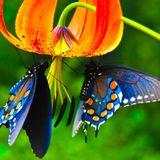 The Designer - Butterfly Season, Part 1 (2014)