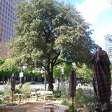 June Walk in Austin