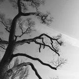 Goddess KRING 041819 autism, synesthesia, deep dark woods,  fabulous superlatives
