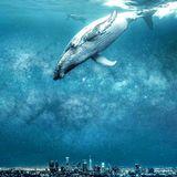 думай о море XIII