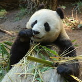 Pandamuseum
