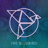Live @ The Bluebird - Set the Vibe