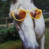 Neat, Dan And Mark Episode 24 - Snoop Horse