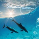 Groove Essence - Dolphins