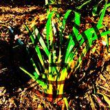 Organic NexuSOUL  Mix | Afro & Soulful