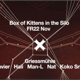 Koko - Box of Kittens - November 2014 - Part 2