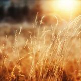 014. Fourteen. (AN) Unexpected Sunshine