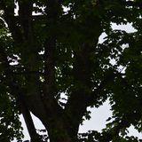 """Tom Botanical's """"from Morning till Dark"""" mix 2012"""