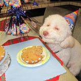 Happy Birthday Rozi
