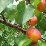 Give fruit trees the best start in life