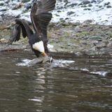 The Eagle and El Condor 3
