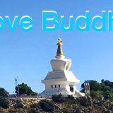 Love Buddha
