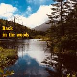 Back in the Woods by Dr Manolito
