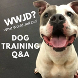 its simple, What Would Jeff Do? Dog Training Tip of the Day #171