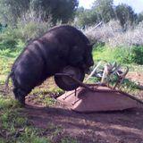 hofer66 - arturo rules - ibiza sonica - 110623