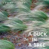 A Duck in a Tree 2013-06-15 | The Chord That Did Not Exist