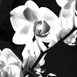 McBain - Flowers (18-03-17 Stroom.tv)