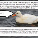 """Baaritiski """"Bemböle Cassettes kevätmyyjäiset 20.4 klo 16-20"""" -special -  19.4.2019"""