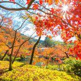 Autumnasia 2018