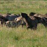 HorseSense Episode 11 - Jane Myers talks Equicentral land management practices