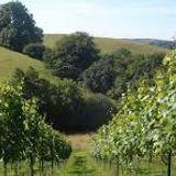 Wellhayes an Exmoor  Vineyard