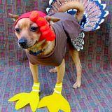 BobNod #27 - This ain't no Turkey!