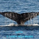 Il canto delle balene by paSCa