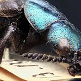Museums hold species not yet named and maybe now extinct