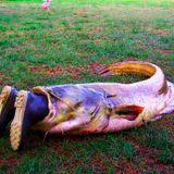 Stompin' Catfish