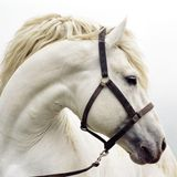 white horse nasty noise ft. pili, dave, ehn, miligrimes