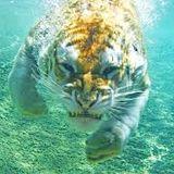 XXXV12 Wet Tiger mix