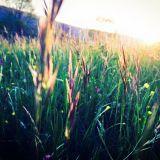 Walk on Grass with Sunshine Mix