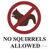 MMB ,16,05,2016, No Squirrels Allowed Show. KMF Radio.