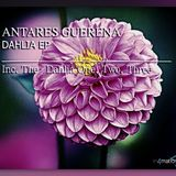 Antares Guerena .;. Dahlia Three Original_Mix [in4mation Records]