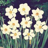 Musik für Blumen und andere Sonnenanbeter