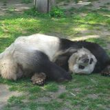The Panda's Poison , Encryption Baddest zn
