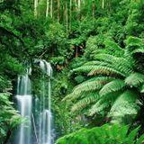 Jungle waterfall