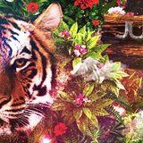 MC Zlatý Strom presents Jungle Edition mixed by dj Drill