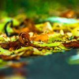 Autumn Mix 2013 (Team 140 Edition)