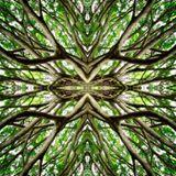 Progressive Psychedelic Trance Mix
