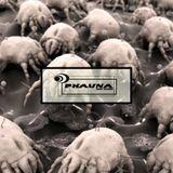 I phauna I UDM podcast