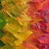 Autumn Leaves Vol.1
