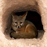 FUR FRICTION 008 | FrozenDub - Foxhole