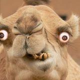 LIVE @ CRAZY CAMEL VOL.1 - 2014