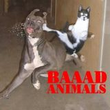 BAAAD ANIMALS