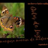 capítulo 9: Mariposa marrón de madera