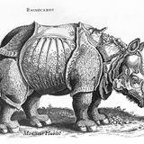 Rhinoceros by Monsieur Hublot